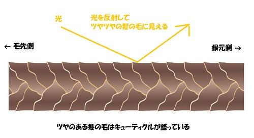 ツヤツヤな髪の毛のキューティクル解説図